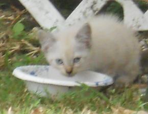 Baby White - prior to capture.