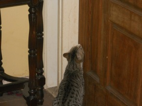 Most cats, when they are Out want to be In, and vice versa, and often simultaneously. - Dr Louis J. Camuti