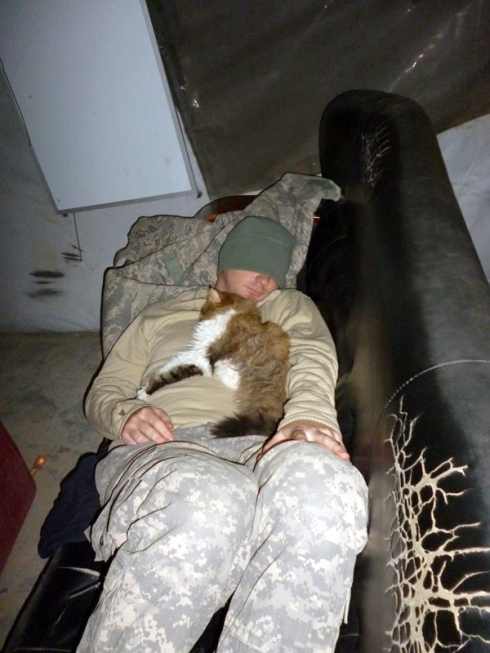 Soldier Napping With a cat | Life With Cats