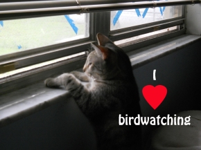 I love birdwatching