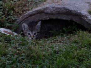 New little ones peeking.