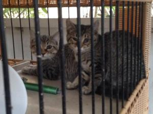 Kittens safely transferred into a crate for taming.